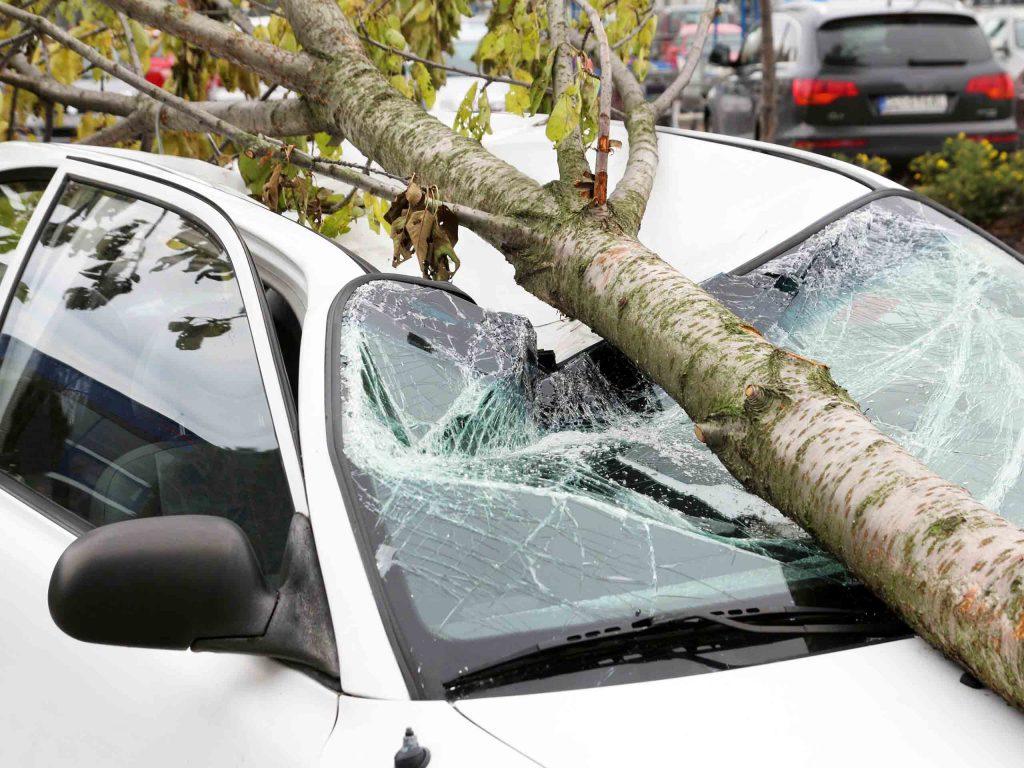 Последствия от упавшей на автомобиль ветки.