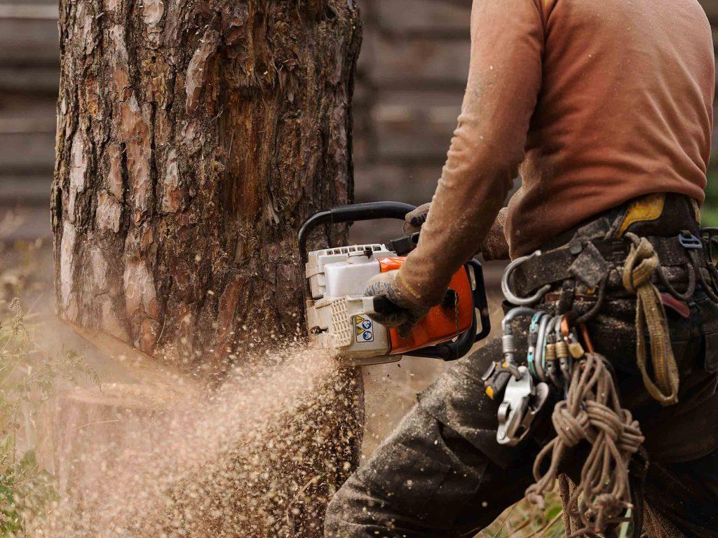 Снос дерева целиком.