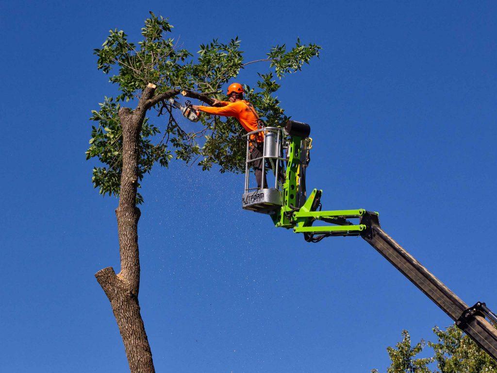 Снос дерева на территории дачного участка.
