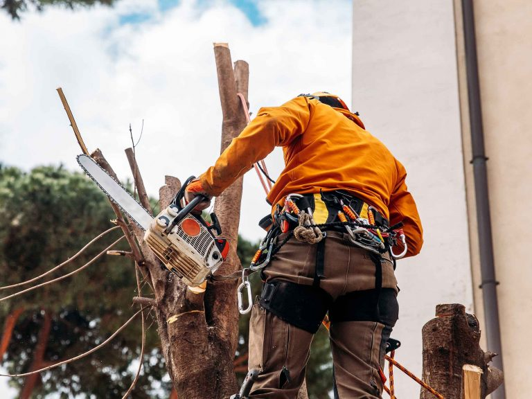 Альпинист срезает ветки и ствол дерева бензопилой.