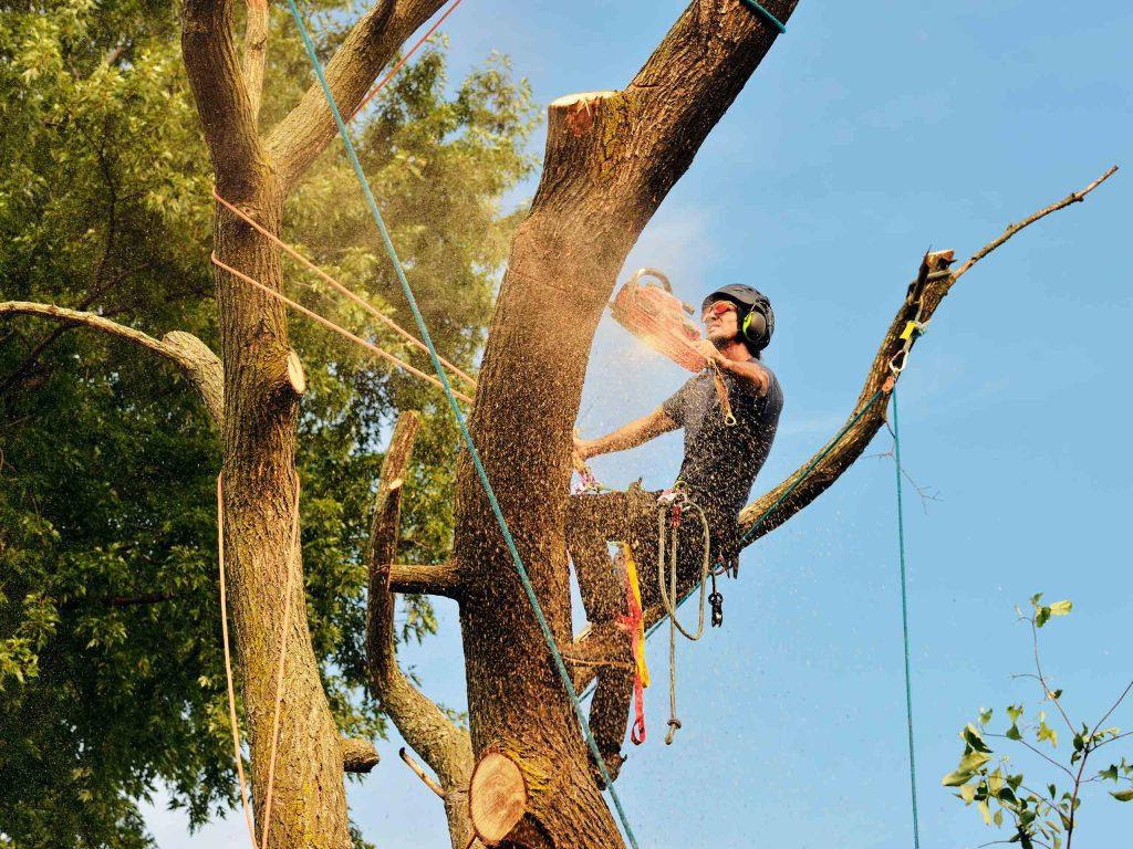 Спил высокого дерева альпинистом.
