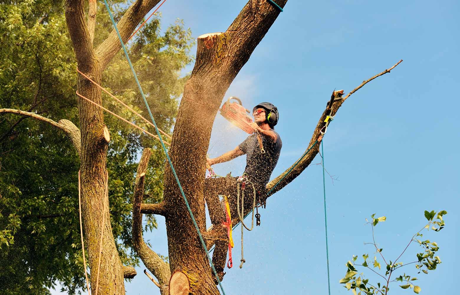 Спиливание деревьев в Киеве.