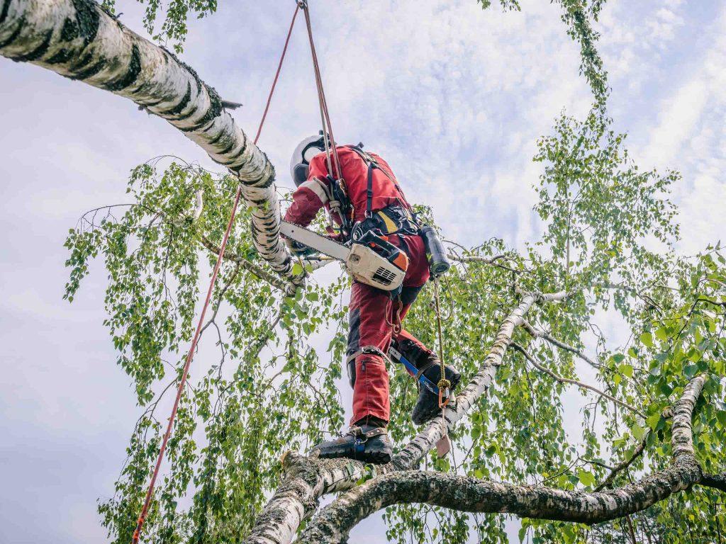 Удаление дерева методом промышленного альпинизма.