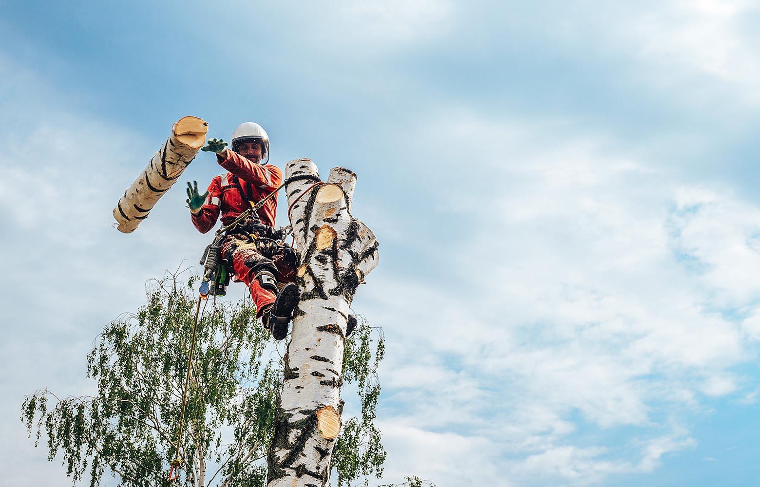 Удаление дерева частями в Киеве.
