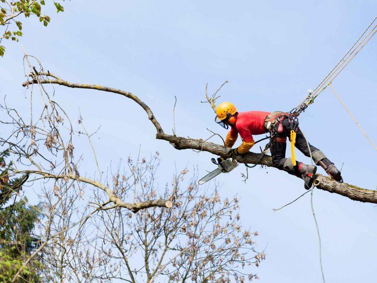 Высотное удаление дерева альпинистом.