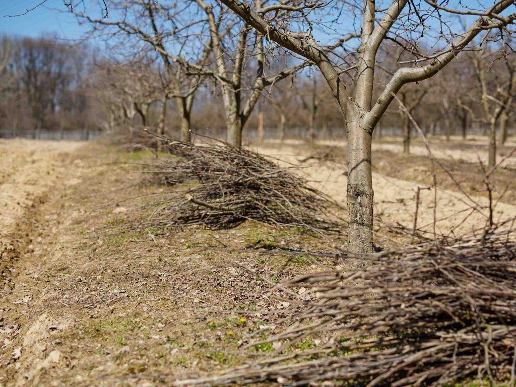 Уход и обработка деревьев в весенний период.